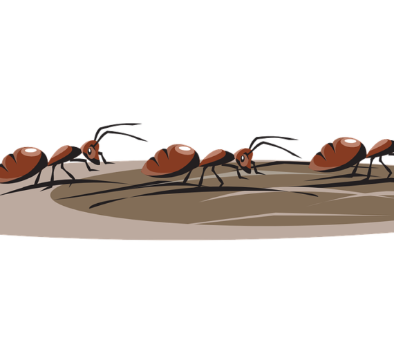 Entrepreneurial lessons from ants